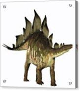 Stegosaurus Profile Acrylic Print