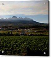 Stellenbosch Vineyard Acrylic Print