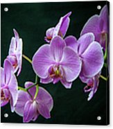 Stem Of Orchids  Acrylic Print