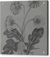 stems of gerbera from Rajbhavan Dehradun Acrylic Print