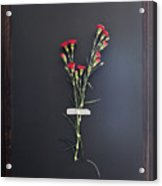 Stems Of Red Flowers Taped To Chalkboard Acrylic Print