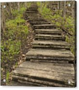Step Trail In Woods 17 A Acrylic Print