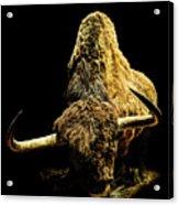 Steppe Bison Acrylic Print
