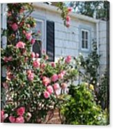 Steps In Pink Acrylic Print