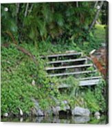 Steps In The Grass Acrylic Print