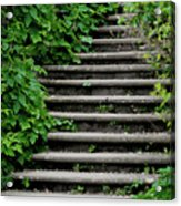 Steps With Ivy Acrylic Print