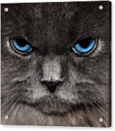 Stern Kitty Acrylic Print