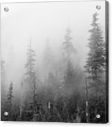 Stevens Pass Trees And Fog 3201 Acrylic Print