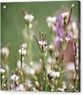 Stick Flower Acrylic Print