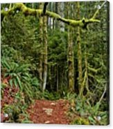 Sticking Out In The Rain Forest Acrylic Print