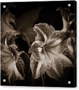 Still. Life. Colorless. Flowers. Acrylic Print