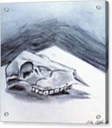 Still Life Drawing Cow Skull 02 Acrylic Print