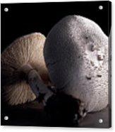 Still Life Two Mushrooms Acrylic Print