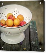 Still Life With Yellow Plums  Acrylic Print