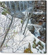 Still Under A Blanket Of Snow In Early May Acrylic Print