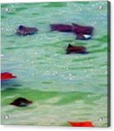 Sting Rays Acrylic Print
