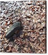 Stone And Leaves Acrylic Print