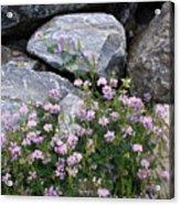 Stone Flowers Pink Acrylic Print