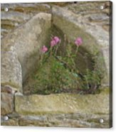 Stone Wall Determination Acrylic Print