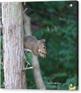 Stopping For A Snack Acrylic Print