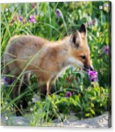 Stopping To Smell The Flowers Acrylic Print