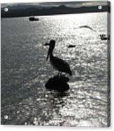 Stork At Evening Acrylic Print