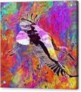 Stork Fly Elegant Feather Bird  Acrylic Print