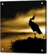 Stork In Sunset Acrylic Print