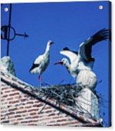 Storks Of Segovia Acrylic Print