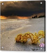 Storm And Sea Shell On Sanibel Acrylic Print
