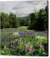 Storm In The Lupine Acrylic Print