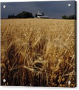 Storm Over Wheat Field  Acrylic Print