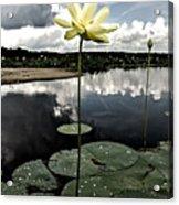 Stormy Lotus Acrylic Print