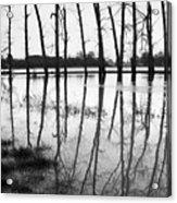 Stranded Trees II Acrylic Print