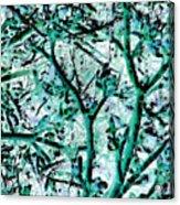Strange Forest In Springtime Acrylic Print