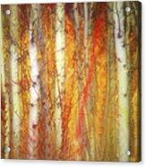 Strange Forest Acrylic Print