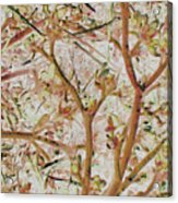 Strange Forest With Small Birds Acrylic Print