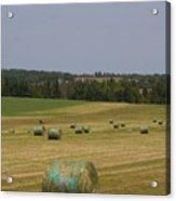 Straw Dries In A Farmers Field Acrylic Print