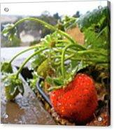 Strawberries And Rain Acrylic Print