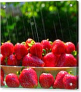 Strawberries And Summer Showers Acrylic Print