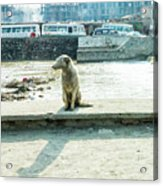 Stray By The River Signed First Edition Acrylic Print