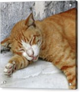 Stray Cat Sleeps On The Floor-1 Acrylic Print