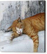 Stray Cat Sleeps On The Floor-2 Acrylic Print