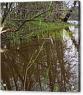 Stream Entering Mississippi River Acrylic Print