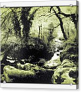 Stream In An Ancient Wood Acrylic Print