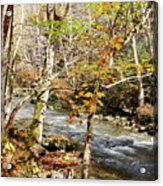 Stream In An Autumn Woods Acrylic Print
