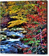 Stream In Autumn Acrylic Print