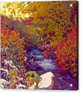Stream In Autumn  Acrylic Print