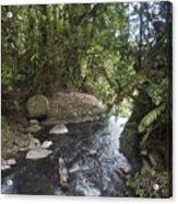Stream In  Rainforest Acrylic Print