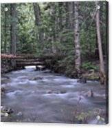 Stream In The Forest Acrylic Print